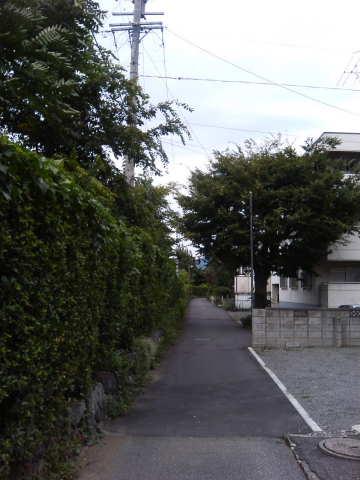 生け垣の道